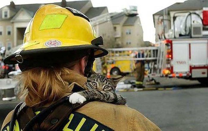 Gaisruose išgelbėti katinukai