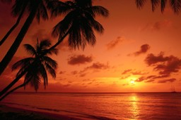 Apie oranžinį dangų